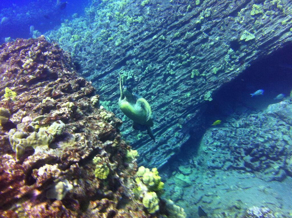 scuba diving, diving certification, scuba diving trips