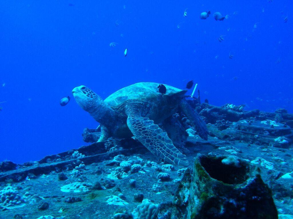 scuba diving, diving certification, scuba diving trips, ocean activities