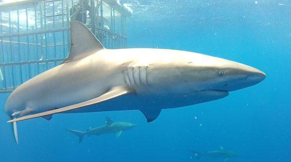 shark-best