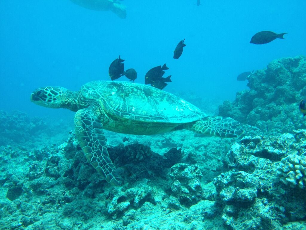 Scuba Diving Surf N Sea
